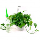 Irrigation houseplants 4 pcs TV