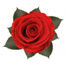 Stabilized rose red 6cm