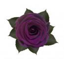 Stabilized rose purple 6cm