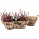 Rattan basket square 37x22cm height 12cm gray