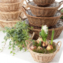 Großhandel Pflanzen & Töpfe: Weide Schale rund Ø20cm hell