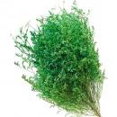 Love grass green 75cm 120g