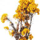 groothandel Woondecoratie:Rijstbloem geel 65cm 60g