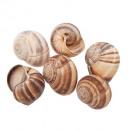 wholesale Rings:Snail ring 45pcs