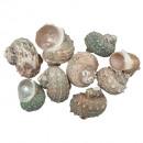 Snail fossil 750g