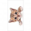 ingrosso Bagno: Photoprints Sweet home Kitten Telo mare bianco