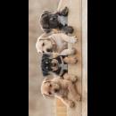 Photoprints Sweet home Dog 2020 beach towel