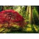 Puzzle 1000 darab Erdő naplementekor