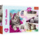 Puzzle Cat Puzzle 160 elementos - Gatos lindos