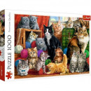1000 pieces puzzle - Cat meeting