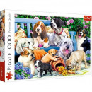 Puzzle 1000 pieces - Dogs in the garden