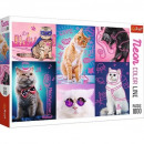 Puzzle Cat Puzzle 1000 elements Neon Color Line -
