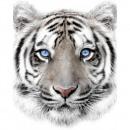 mayorista Materiao de transporte y accesorios: Impresiones fotográficas Sweet Home White Tiger mi