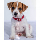 Photoprints Sweet home Jack Russell Terrier micro