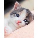 wholesale Business Equipment: Photoprints Sweet home Kitten microflannel blanket