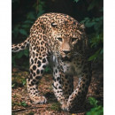 wholesale Shipping Material & Accessories: Photoprints Sweet home Leopard Green microflannel