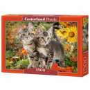Puzzle 1500 pieces Kittens