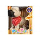 interactive dog box 21x24x16 cl1187a window box