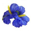 groothandel Feestartikelen: 2 blauwe hibiscus bloemen haarspeldjes - ...