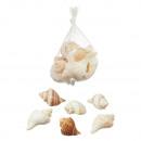 Muscheln, groß, ca. 150g