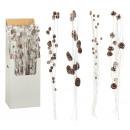 groothandel Woondecoratie: Decoratieve bundel kegels, 4- maal geassorteerd ,