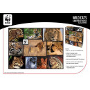 wholesale Toys:WWF 1000 Puzzle Wildcats