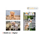 wholesale Home & Living: carpet 40x60cm pets 3s digital comfort