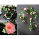 Borostyán rózsa 9 virág 2,1 m színű keverék - 1 da