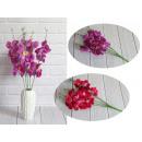 Bouquet di orchidee 5 steli (altezza 50 cm)