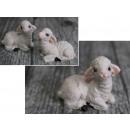 Húsvéti húsvéti bárány mix pozíció 4,5x3,5 cm