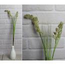 Un ramoscello di erba decorativa con un orecchio d