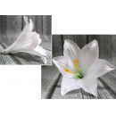 wholesale Other: The product head of the lily 16x13 cm -white - whi