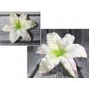Główka wyrobowa lilia śr. 18 - creampink- kremowo