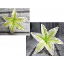 wholesale Other: The head of the product lily lily 18 - newcreamgre
