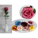 Kwiar rose sviluppato stelo con spine (altezza 50