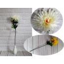Krizantém virágszár (magasság 68 cm, virág 20 cm)