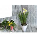 Kwiat dekoracyjny z trawą w plastikowej doniczce 2