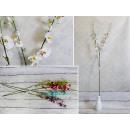 Virág kis virágok a szár 97 cm