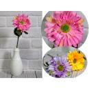 Stelo di fiori Gerber (altezza 37 cm, fiore 9,5 cm