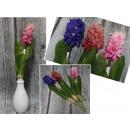 wholesale Decoration: Flower hyacinth stem 1 piece 39 cm