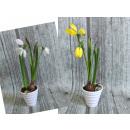 Großhandel Pflanzen & Töpfe: Krokusblüte in einem Plastiktopf 25 cm