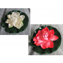 Colore della miscela di fiori di ninfea 15 cm