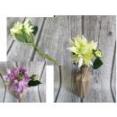Gambo sfilacciato di fiori con un bocciolo di 34 c