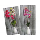 Orchid flower 2 stem with root (55x6 cm)
