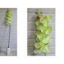 wholesale Artificial Flowers: Orchid flower long stem 100 cm # 158 - green