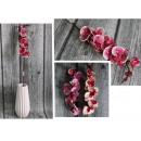 Stelo di orchidea fiorito, 70 cm