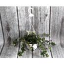 mayorista Jardin y Bricolage: Una flor verde en una maceta colgante.