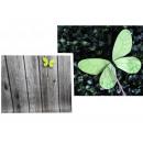 Farfalla sul picco 55x12x9 cm - 1 pezzo