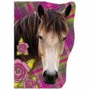 FaSoLa chevaux