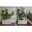 wholesale Plants & Pots: Herb cover for fences 26x20x10 cm